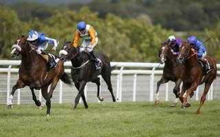 horse racing betting tips: bank can beat them in the sussex stakes
