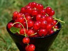 superfood schizandra berries loved by gwyneth paltrow