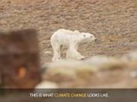 national geographic admits there was no evidence polar bear in video was dying due to climate change