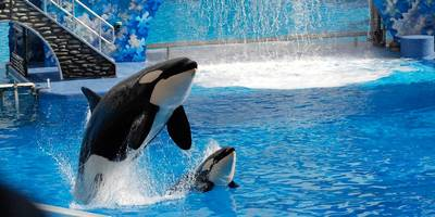 seaworld surges after saying free beer helped it bring in more visitors to its parks (seas)