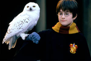 all 8 'harry potter' movies to return to theaters next month