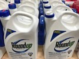 more than £8bn is wiped off chemicals group bayer as court rules weedkiller roundup caused cancer