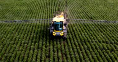 Monsanto's Court Ruling Marks a Turning Point for Cancer-Causing Weed Killer
