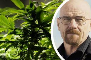 Man avoids jail for Breaking Bad style £48k cannabis production