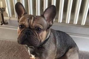 Family heartbroken after French Bulldog dies drowning in pond at the National Trust's Saltram House