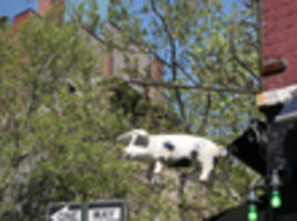 the spotted pig under investigation by ny attorney general