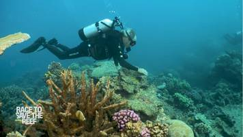 cnn witnesses the damage to the great barrier reef in special documentary 'race to save the reef'