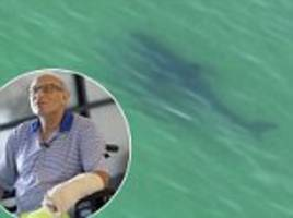 shark attack victim says he punched shark in gills to...