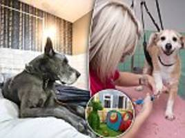 take a peak inside £1m luxury dog hotel that celebrity footballers have been using for their pooches