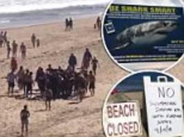 man, 26, dies after being attacked by a shark as he was boogie boarding in cape cod