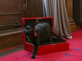 philip hammond's cat gladstone has gone missing in westminster