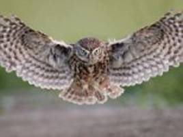 stunning photographs of an owl in flight, pelicans in greece and a hummingbird in costa rica