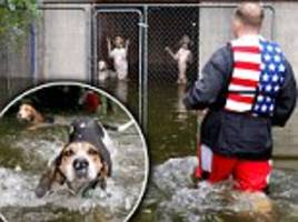 hurricane florence hero volunteer rescues six dogs abandoned in a locked cage