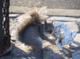 Video: In Canada, Subway Rats Have Fur, Are Called 'Squirrels'