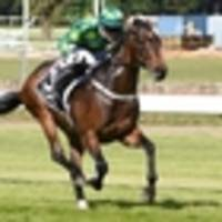 racing: trainer has high hopes for hiflyer