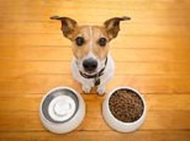 dog owners face a higher risk of e. coli, salmonella and mrsa