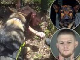 'we're not taking the dog off!': k9 called titan takes down kidnap baby suspect in florida