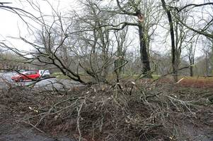 storm ali causing chaos as falling trees are causing ayrshire roads to close
