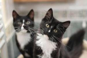 Met Police officers say the 'Croydon Cat Killer' does not exist after all