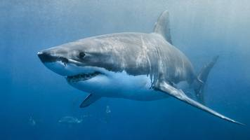 Queensland shark attacks: Two injured in 24 hours at tourist spot