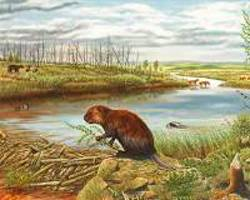 beavers have an impact on the climate