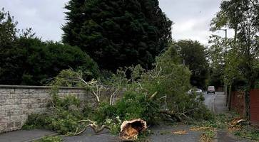 1,400 remain without power as storm ali clear up continues