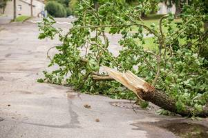 branch falls into road and damages two cars in radstock amid storm bronagh