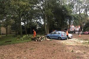 one car crushed and two damaged as tree comes down in school car park - minutes before pupils let out