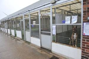inside hull's crumbling, decaying rspca, where animals desperate for a home need your help