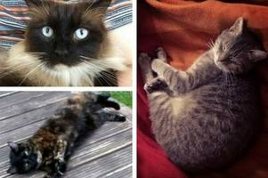 croydon cat killer: streatham vet believe police 'incorrect' to close investigation and say killer remains at large