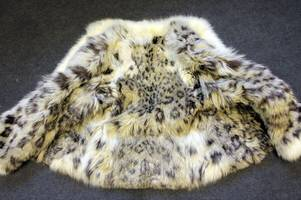 Epsom man sentenced for selling fur coats made of endangered leopard, wolf and lynx