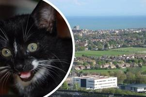 kent police is still investigating 'croydon cat killer' despite met police saying it doesn't exist