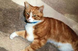 'croydon cat killer' mutilated popular neighbourhood car and not foxes, says heartbroken pensioner