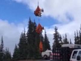 mountain goats are airlifted out of a national park after developing thirst for human urine
