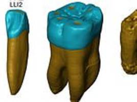 Fossil teeth reveal Neanderthals developed distinct features as far back as 450,000 years ago