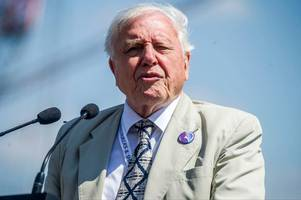 david attenborough reveals how we can save the planet