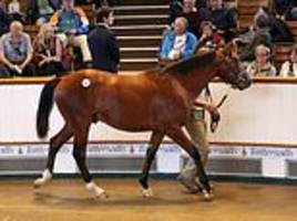 unnamed horse sired by world's most expensive stud galileo now one of most expensive colts ever