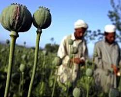 Afghan farmers fleeing drought face more hardship in camps