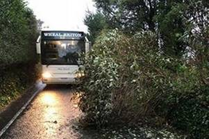 School bus has lucky escape as large tree falls onto road at St Agnes