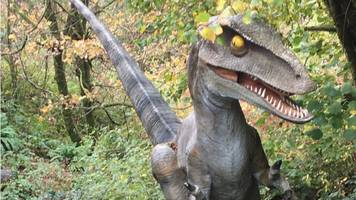 storm callum: appeal for missing dinosaur model