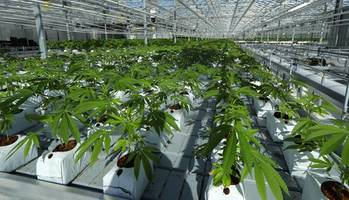 Canada Set To Become Largest Country Ever To Legalize Recreational Marijuana