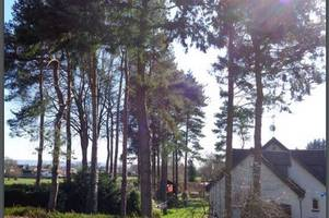 Scottish Government says trees can stay after 14-year neighbour dispute