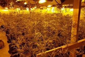 Police found this HUGE £200k drugs factory inside industrial unit... now the man who watered the plants has been jailed