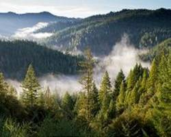 Can forests save us from climate change?