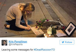 that time a dead raccoon in canada became a viral sensation
