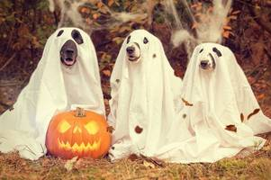 31 weird and wonderful Halloween costumes for October 31