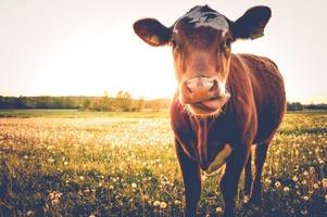 New case of mad cow disease confirmed on a British farm