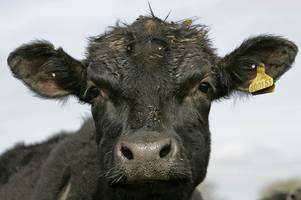 Case of 'Mad Cow' disease confirmed in the UK