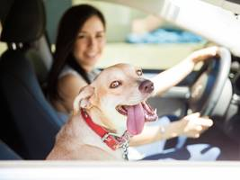 Elon Musk hints at a 'dog mode' feature for Tesla owners to safely leave their pets in their car (TSLA)