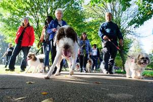 cardiff council u-turn on controversial plans to ban dogs from sports pitches